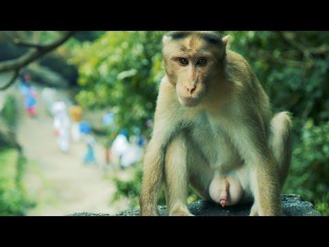 Xxx Mp4 Indian Monkey HD Video Bandar Ka HD Video 3gp Sex