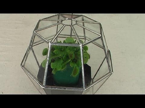 Build a stained glass terrarium using the copper foil technique.
