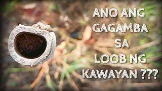 Ano ang Gagamba sa Loob ng Kawayan?