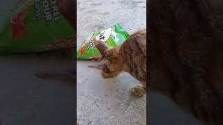 Cat takes food   by Itself