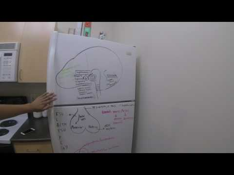 Creative Ways to Study: MCAT Notes on Fridge