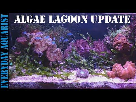 #3 Planted Marine Macro Algae Lagoon Aquarium | 8 MONTH UPDATE