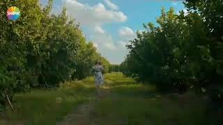 Download Sirin Baran Yeni gelin 22 Eylul cumartesi shwo tv Video