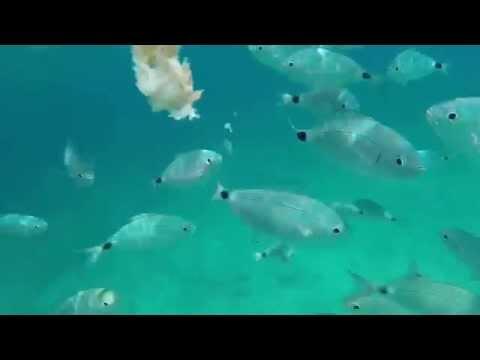 GoPro Hero 3+ Under Water