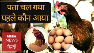 Which came first, the Chicken or the Egg? (BBC Hindi)