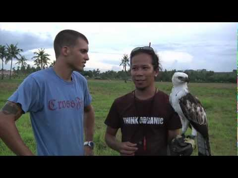 Falconry in the Philippines preview