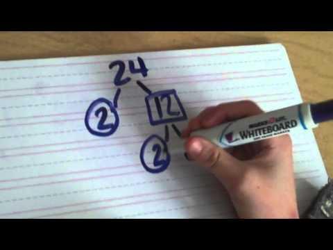 Prime Factorization of 24