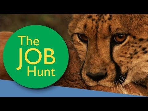 Looking for a job? Look no further | BBC MAKE IT