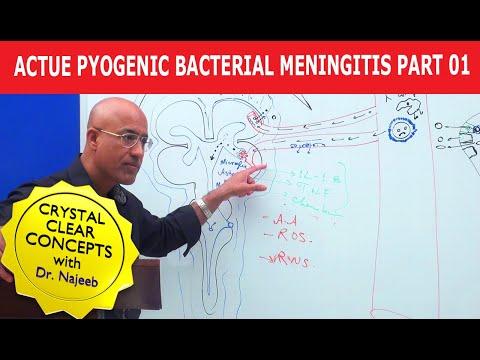 Acute Pyogenic Bacterial Meningitis Part 1