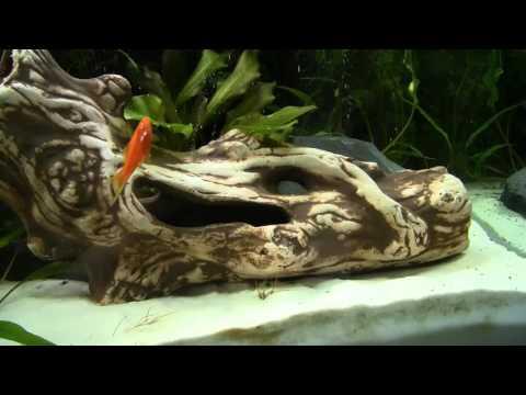 aquarium decoration standing ceramic root by aqua maniac