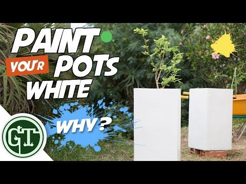 Paint Your Plant Pots White - Why?