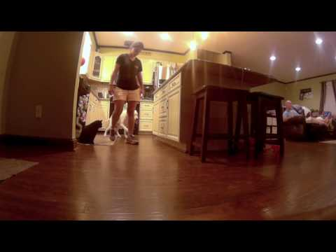 Help! My Dog Chases My Cat!  Dog and Cat Before/After Video!