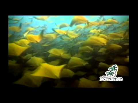 Costa Rica, Travel Excellence (English UK)