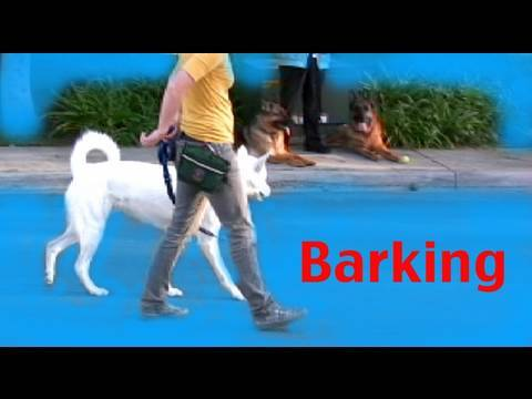Stop barking on a walk - Barking- Episode 3 Dog training