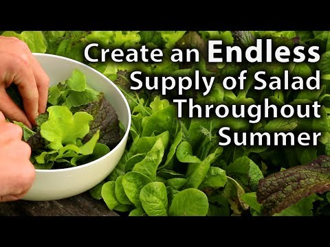 Creating an Endless Supply of Salad over Summer with Minimal Effort