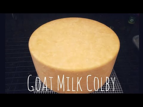 Goat Milk Colby - Cheesemaking at Home