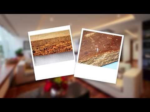 How to Get Rid of Borer and Protect Wood from Borer Damage