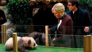 Panda cub growls and jumps at France's first lady, Brigitte Macron