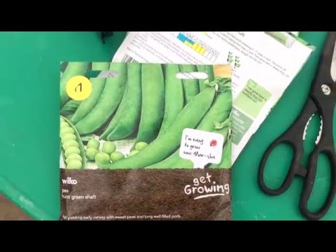 Indoor Chillie's | Sowing Peas In The Greenhouse