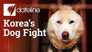 Download Exploring South Korea's dog meat industry Video