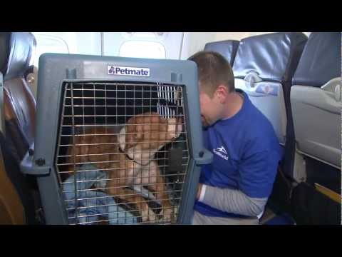 Southwest Airlines and SeaWorld Rescue 60 Dogs and Cats Stranded by Hurricane Sandy