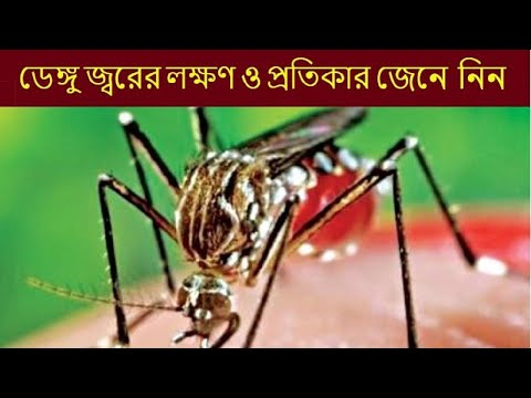 Dengue Fever : Symptoms, Home Remedies, Tips to Prevent Dengue Fever free | Dengue treatment 100%