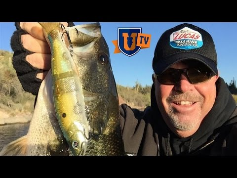 Suspended Bass : Locate & Catch Fish Offshore