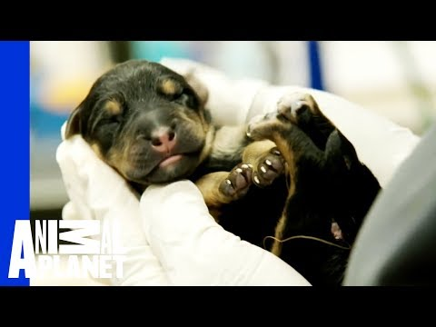 The Story of These Miracle Puppies Will Make Your Day