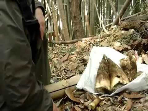 How to Harvest and Eat Takenoko (Bamboo Shoots)