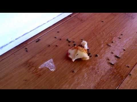 Does Vinegar Kill Ants? A Family Case Study and Funny Commentary 2014