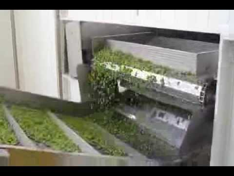 Frozen Pea Processing Plant by BAJAJ PROCESSPACK LIMITED