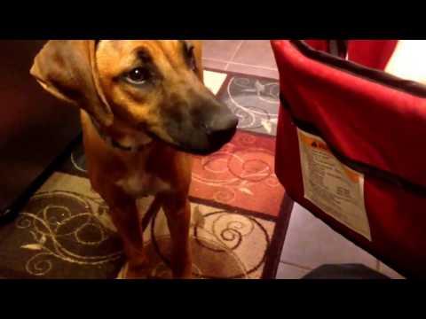 Dog training: learning its name