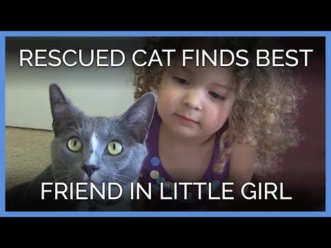 Cat Healing From Gunshot Wounds Finds Best Friend in Little Girl