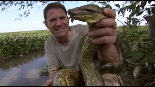 Steve Wrestles with a Green Anaconda | Deadly 60 | Series 3 | BBC