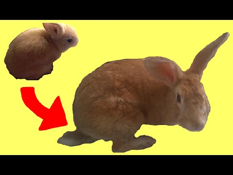 Rabbit Growing 2.5 Years (Time Lapse)