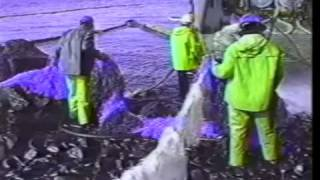 Corexit 9580 Dispersant Use In The Exxon Valdez Oil Spill Cleanup 1989