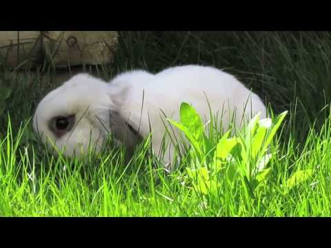 BudgetBunny: Treating Mites In Rabbits