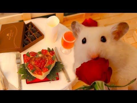 Vanilla's Valentine's Day Surprise 🌹