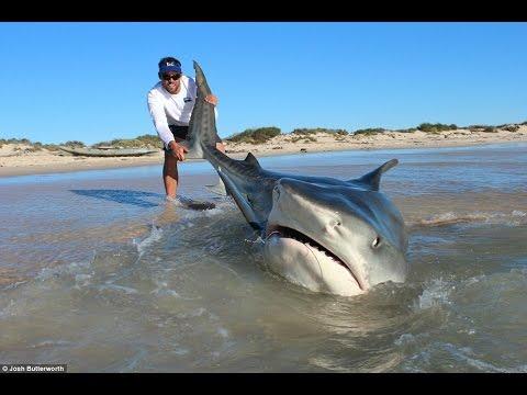 Shark fishing-GREAT WHITE SHARK CATCH-Monster Bull Shark HD
