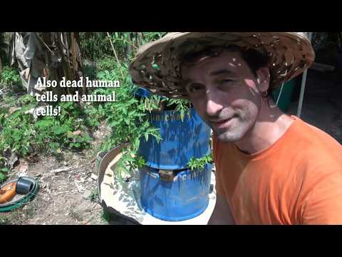 CAN YOU GROW FOOD USING BIOCHAR & HUMAN SEWAGE! A SELF WATERING SYSTEM!