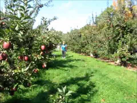 Follow Me Around at the Apple Farm