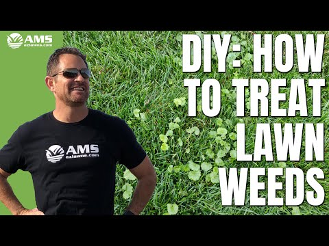 Do-It-Yourself Weed & Feed Lawn Care in Phoenix