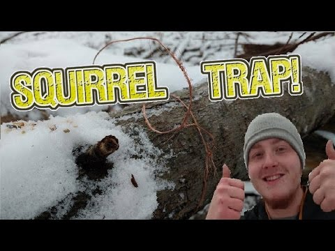 Super Easy Squirrel Trap!:Self reliance