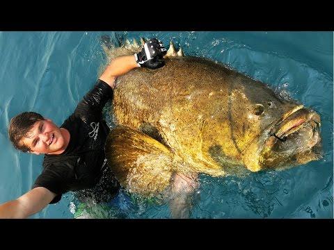 Extreme Goliath Grouper Fishing!