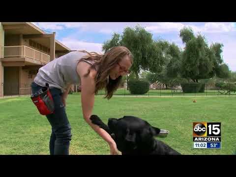 Dog bites young girl on Southwest Flight