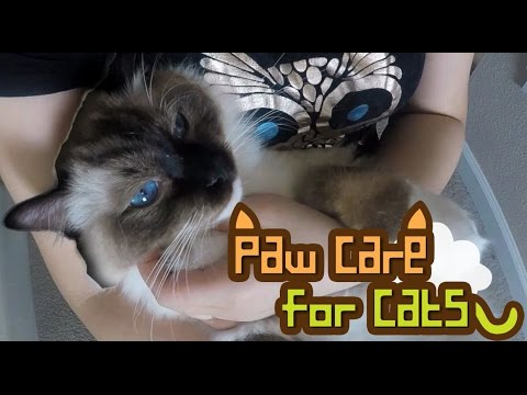 How to Trim Hair on Cats Between the Pads : Paw Care for Cats