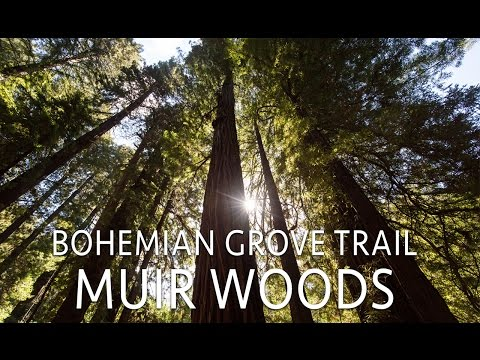 Muir Woods: Hiking the Bohemian Grove Trail