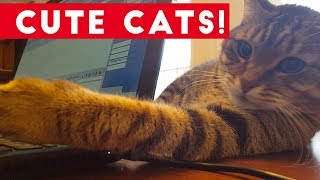 Little Kittens and Cute Cats Compilation   Funny Pet Videos