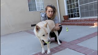 CELEBRATING OUR DOG