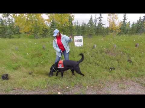 Alberta Environment & Parks - Invasive Weeds Training